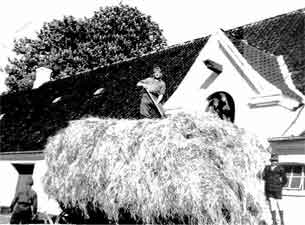 Gaunø/Næstved. Szénapadlás 1945. Matolai Béla és Árpád Kásás a résben.