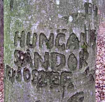Sándor Joszef's bøgetræ ved Vejle